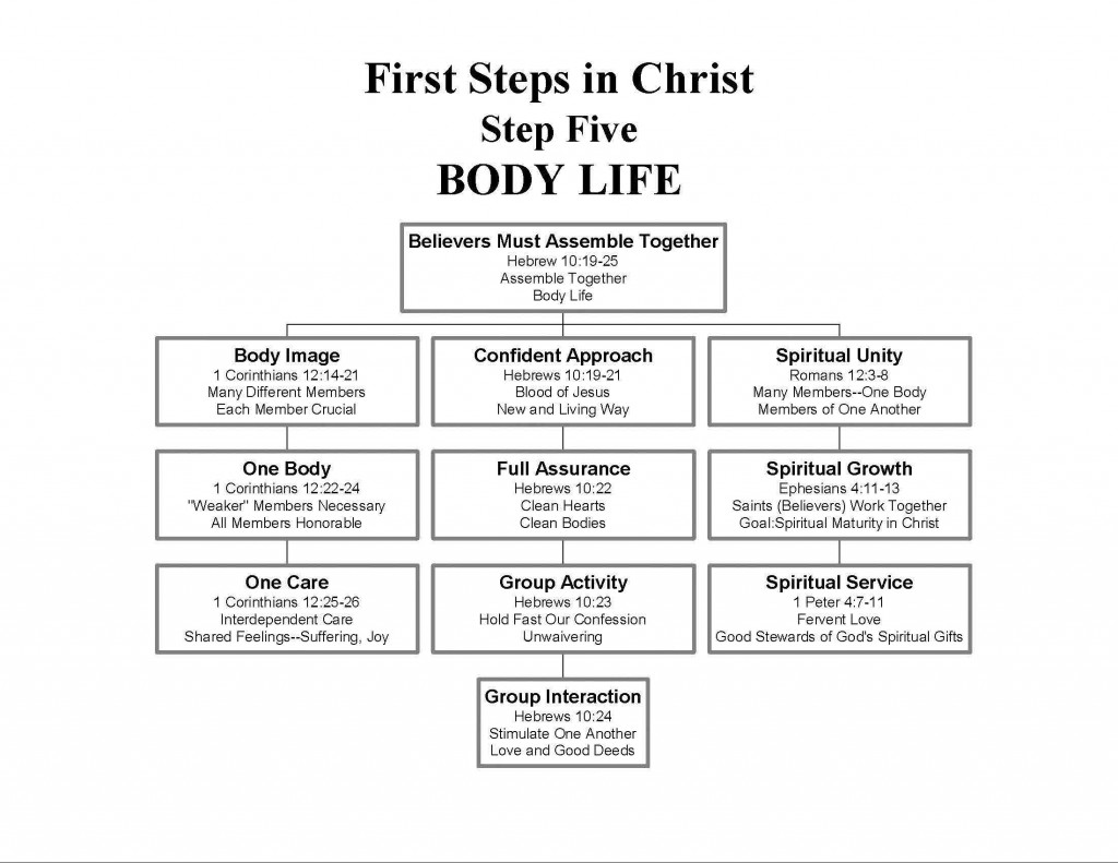 STEP5--BodyLife