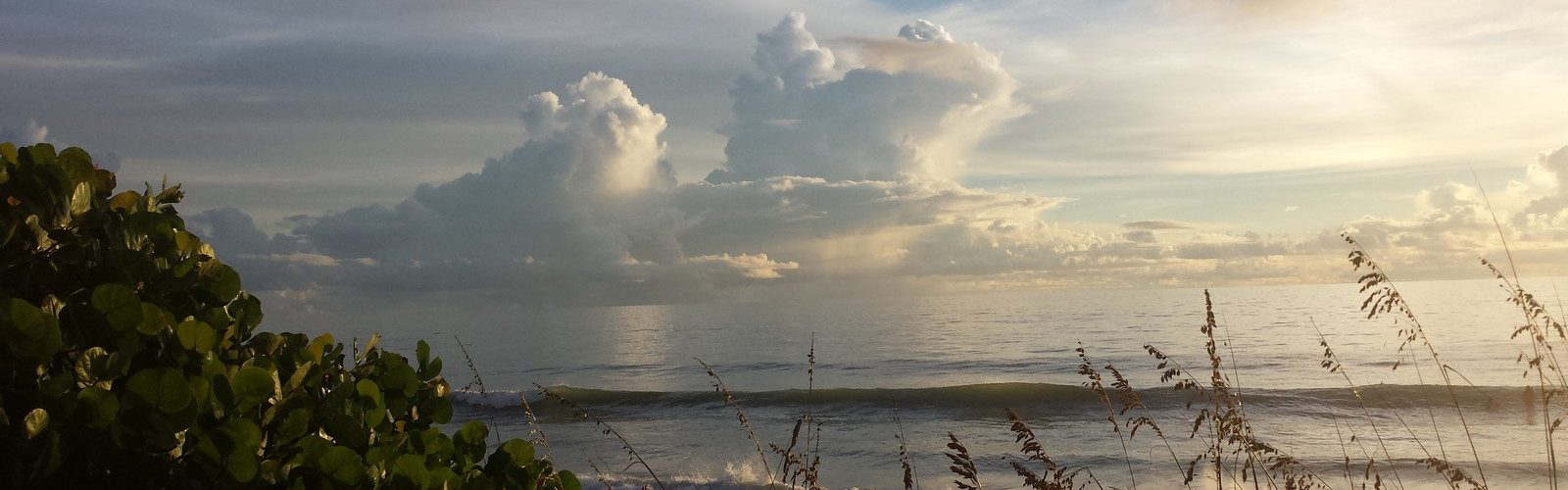 Morning Sea Oats and Sea Grapes